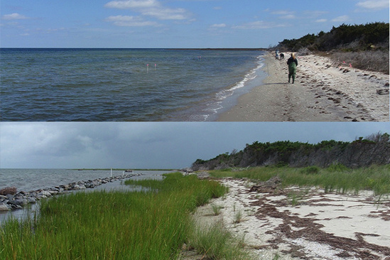 Before and after photos of a living shoreline, with a bare shore above and a vegetated marsh below