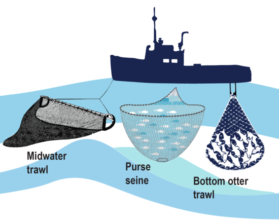 Fishing gear, left to right: midwater trawl net, purse seine,and bottom otter trawl.