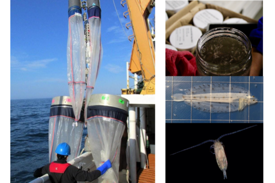 plankton nets, sample jar, witch flounder larva, and calanus copepod by harvey walsh