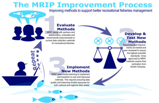 MRIP-ImprovementProcess.png