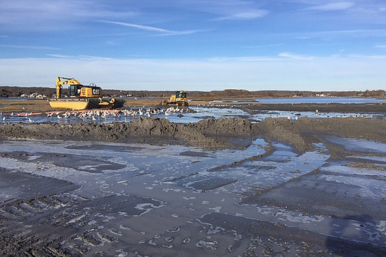 A flock of small white birds sits on an open, muddy area covered in puddles and piles of soil. Two pieces of heavy machinery sit in the distance.