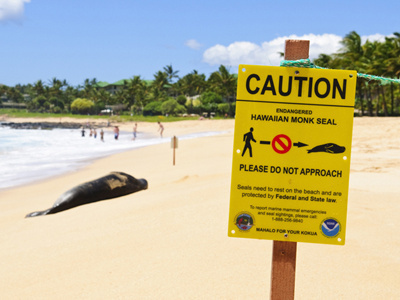 Monk seal on beach. The sign in the foreground instructs people to walk around the seal.