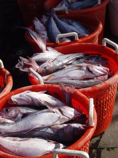 Baskets of haddock.