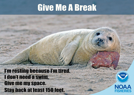 Give me a break_700x500.jpg