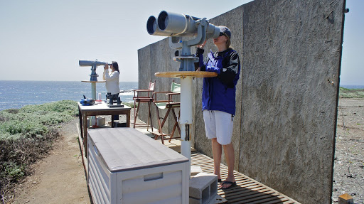 Researchers using high-powered binoculars (25x) to scan for gray whale cow/calf pairs at the Piedras Blancas field station near San Simeon, California. Photo: NOAA Fisheries