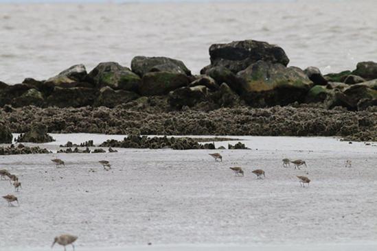 rockefeller-refuge-Louisiana oysters 750x500.png