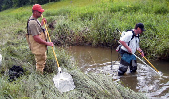 People sampling fish populations with nets in a wetland.