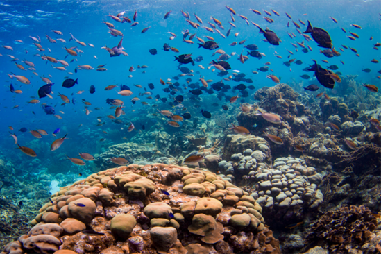 Fish swim above a coral reef