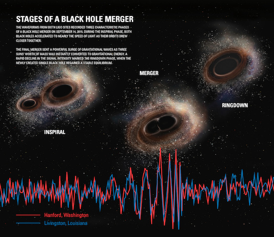 Stages of a Black Hole Merger: The waveforms from both LIGO sites recorded three characteristic phases of a black hole merger on September 14, 2015. During the inspiral phase, both black holes accelerated to nearly the speed of light as their orbits drew closer together. The final merger sent a powerful surge of gravitational waves as three suns' worth of mass was instantly converted to gravitational energy. A rapid decline in the signal intensity marked the ringdown phase, when the newly created single black hole regained a stable equilibrium. Illustration: LIGO, NSF, Aurore Simonnet (Sonoma State U.) (Click image to download hi-res version.)