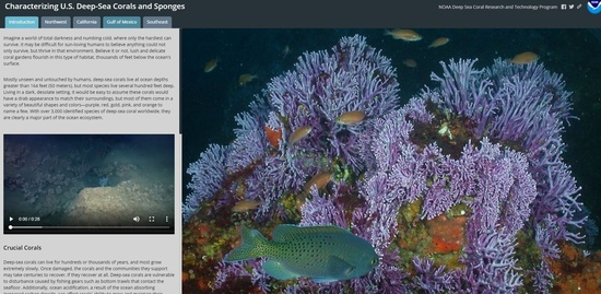 Characterizing U.S. Deep-Sea Corals and Sponges_story map