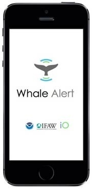 Whale Alert phone app entry screen shot