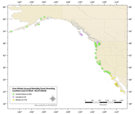 Map of gray whale strandings along the west coast of North America through May 27, 2019
