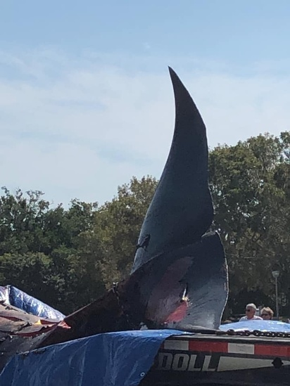 Bryde's whale on flatbed truck for transport