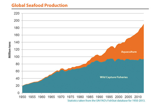 Graph of global seafood production from 1950-2013.