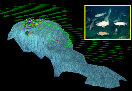 Forty-three Fathom Bank and clusters of rockfish visualized from active acoustic data. Insert: species composition and size distribution of rockfish determined from remotely operated vehicle stereo cameras.