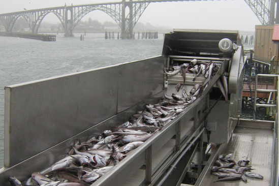 Whiting processing
