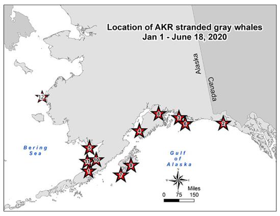 750x500 AKR gray whale map 2020.06.18.png