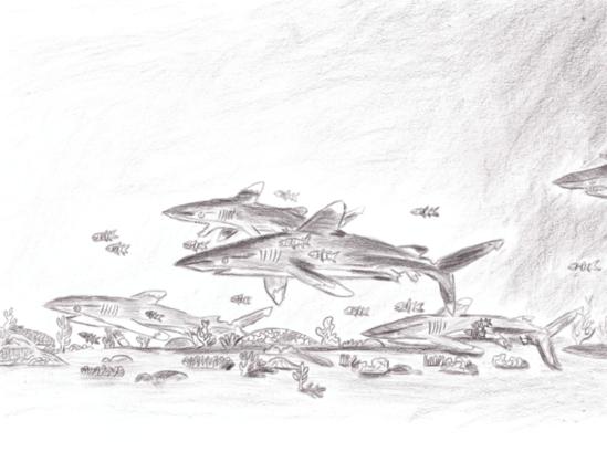 Winner 3-5 2-D_ Sewon C., grade 3, TX, _Oceanic Whitetip Shark!__0.PNG