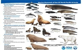 marine mammals of Alaska and the Arctic