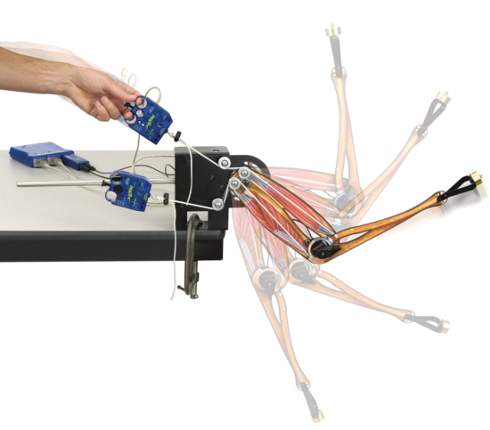 Human Arm Model