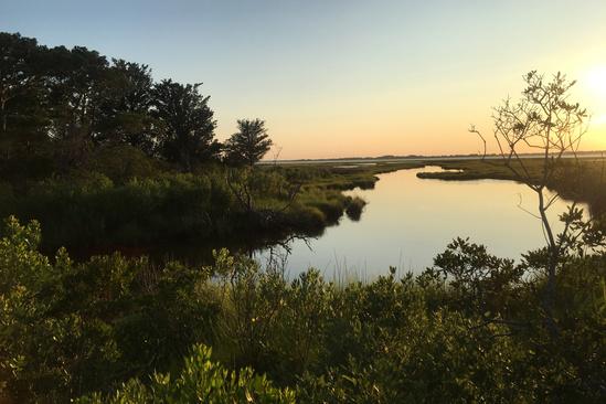 Copy of sheverly2_wetland.jpg