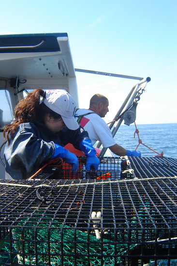Scientist checking lobster traps on a boat at sea with fisherman.