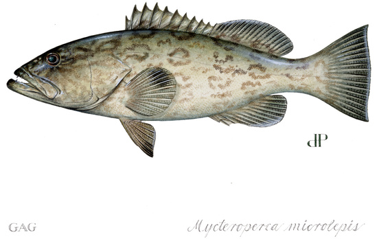 fish-MMICR-illustration-DP.JPG