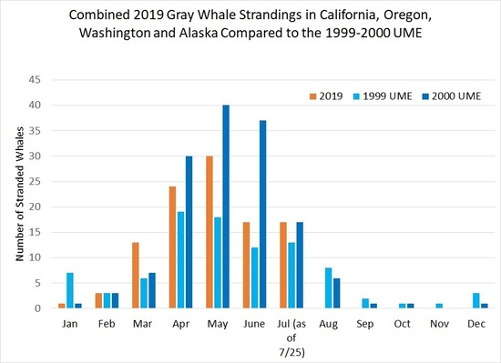 Gray Whale Stranding Graph 28May2019.jpg