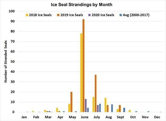 Ice Seal UME .jpg