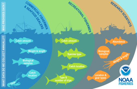 Who collects fisheries data? What data do we collect annually? This image has three sections in overlapping colored circles showing that fisheries data is collected by commercial fishers and dealers, recreational fishers, and research scientists with a corresponding drawing of a vessel silhouette for each sector. The three sections show the different types of data collected annually by each sector with icons of marine species including Atlantic cod, Atlantic herring, striped bass, flounder, lobster, black sea bass, tuna, scallop, and longfin inshore squid.