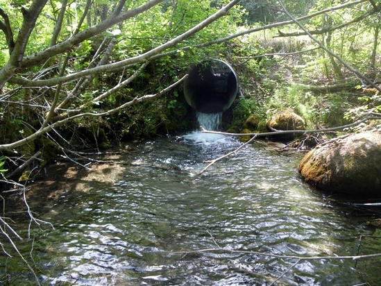 Stream Restoration for Salmon in Southeast Alaska.jpg