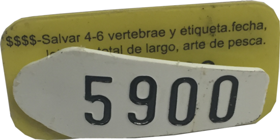 A yellow and white conventional fish tag used to tag sharks.