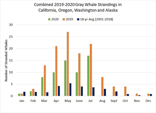Gray Whale Monthly Graph.jpg